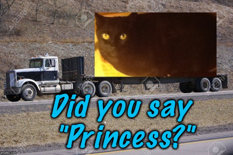"Did you say ""Princess?"" 