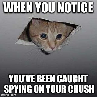 cat meme | WHEN YOU NOTICE YOU'VE BEEN CAUGHT SPYING ON YOUR CRUSH | image tagged in cat meme | made w/ Imgflip meme maker
