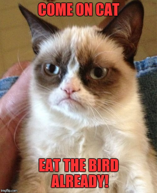 Grumpy Cat Meme | COME ON CAT EAT THE BIRD ALREADY! | image tagged in memes,grumpy cat | made w/ Imgflip meme maker