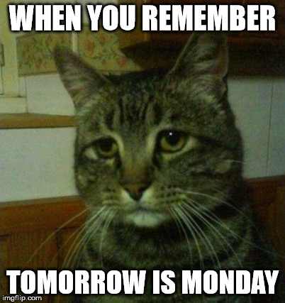 monday | WHEN YOU REMEMBER TOMORROW IS MONDAY | image tagged in cats | made w/ Imgflip meme maker