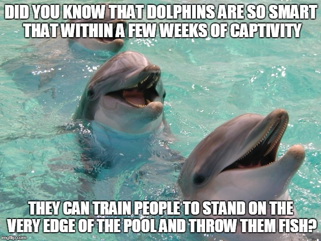 Last Laff | DID YOU KNOW THAT DOLPHINS ARE SO SMART THAT WITHIN A FEW WEEKS OF CAPTIVITY THEY CAN TRAIN PEOPLE TO STAND ON THE VERY EDGE OF THE POOL AND | image tagged in last laff | made w/ Imgflip meme maker