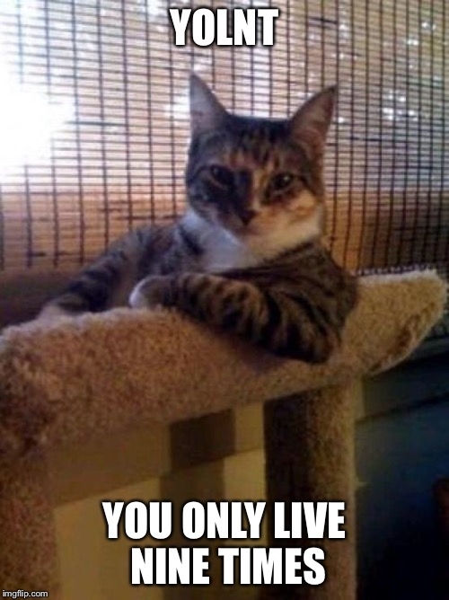 Only 9! | YOLNT YOU ONLY LIVE NINE TIMES | image tagged in cats,cat memes,minty memes,nine lives,yolo,yolnt | made w/ Imgflip meme maker