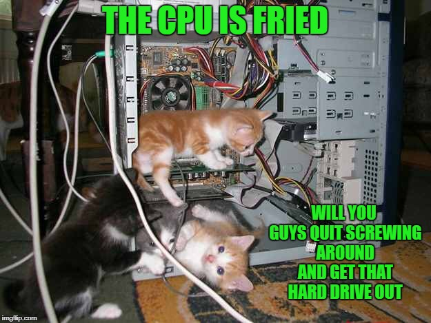 will you guys quit screwing around and get that hard drive out | THE CPU IS FRIED WILL YOU GUYS QUIT SCREWING AROUND AND GET THAT HARD DRIVE OUT | image tagged in kittens | made w/ Imgflip meme maker