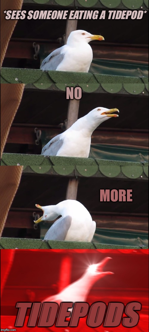 Please stop... | *SEES SOMEONE EATING A TIDEPOD* NO MORE TIDEPODS | image tagged in memes,inhaling seagull,tide pods,tide pod challenge,tide pod | made w/ Imgflip meme maker