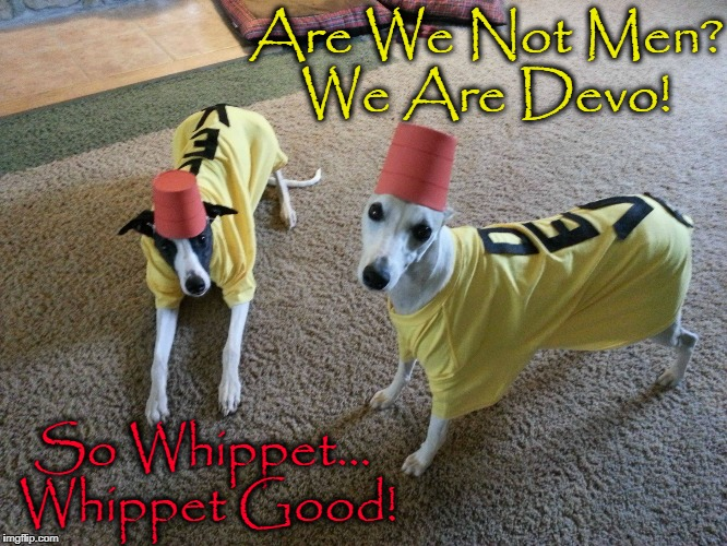 Bone, Sweet, Bone | Are We Not Men? We Are Devo! So Whippet... Whippet Good! | image tagged in vince vance,dogs of democracy,you can best bet well all get wet,when the young dog learns a trick,devo,whip it whip it good | made w/ Imgflip meme maker