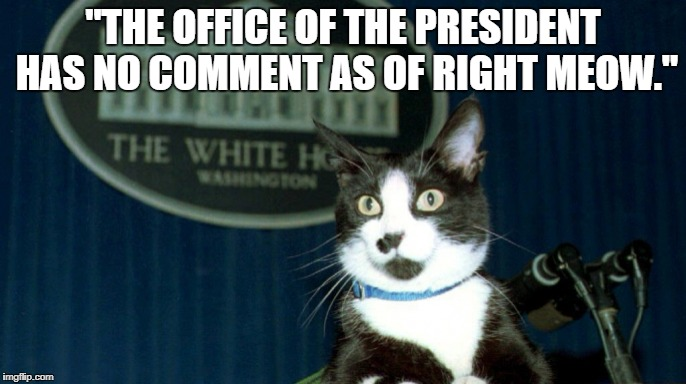 "president puss | ""THE OFFICE OF THE PRESIDENT HAS NO COMMENT AS OF RIGHT MEOW."" 