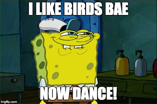 Dont You Squidward Meme | I LIKE BIRDS BAE NOW DANCE! | image tagged in memes,dont you squidward | made w/ Imgflip meme maker