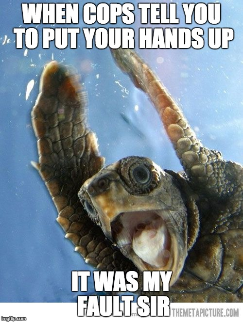 WHEN COPS TELL YOU TO PUT YOUR HANDS UP IT WAS MY FAULT SIR | image tagged in shook turt | made w/ Imgflip meme maker