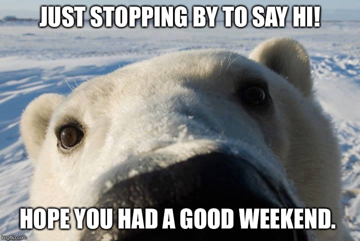 JUST STOPPING BY TO SAY HI! HOPE YOU HAD A GOOD WEEKEND. | image tagged in polar bear | made w/ Imgflip meme maker