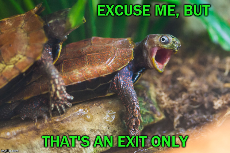 EXCUSE ME, BUT THAT'S AN EXIT ONLY | made w/ Imgflip meme maker