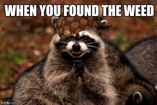 Evil Plotting Raccoon | WHEN YOU FOUND THE WEED | image tagged in memes,evil plotting raccoon,scumbag | made w/ Imgflip meme maker