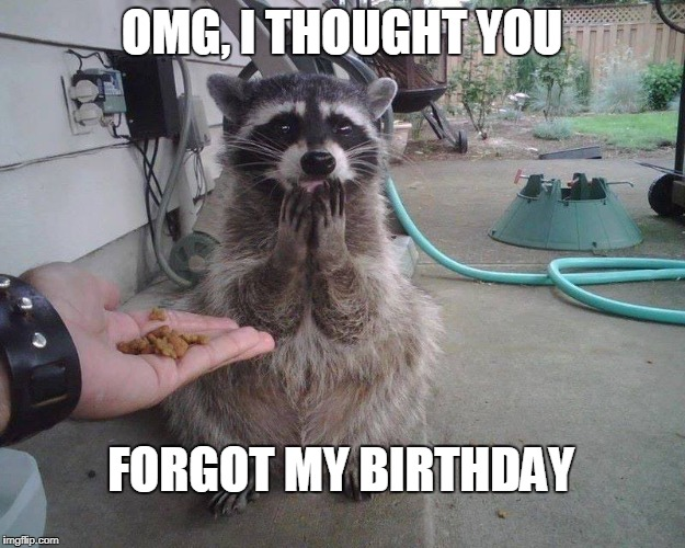 Happy Racoon | OMG, I THOUGHT YOU FORGOT MY BIRTHDAY | image tagged in racoon,surprised | made w/ Imgflip meme maker