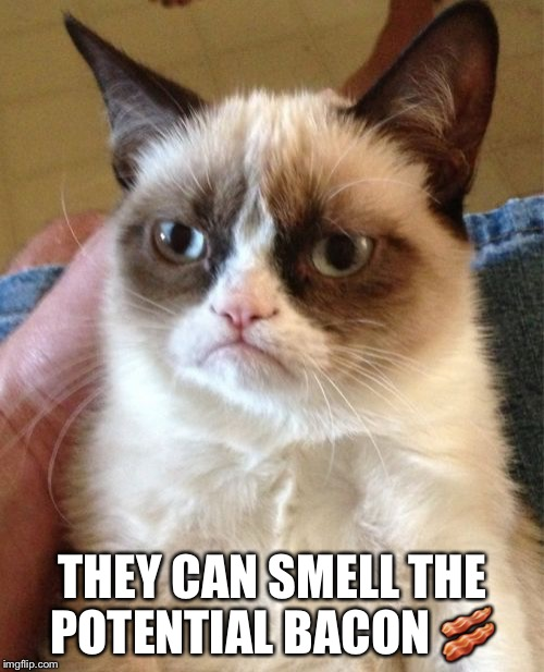 Grumpy Cat Meme | THEY CAN SMELL THE POTENTIAL BACON  | image tagged in memes,grumpy cat | made w/ Imgflip meme maker
