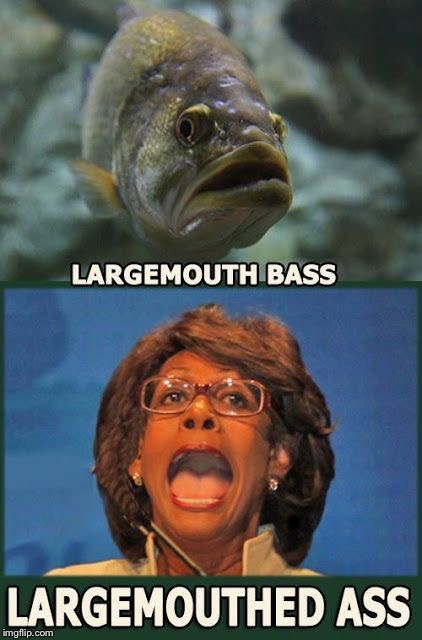 Can you spot the difference? | . | image tagged in maxine waters,drain the swamp | made w/ Imgflip meme maker