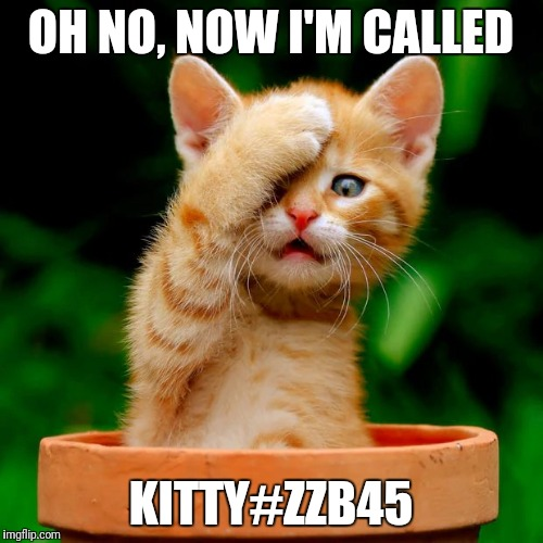 kitten facepalm | OH NO, NOW I'M CALLED KITTY#ZZB45 | image tagged in kitten facepalm | made w/ Imgflip meme maker