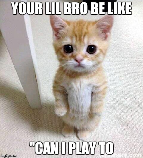 "Cute Cat Meme | YOUR LIL BRO BE LIKE ""CAN I PLAY TO 