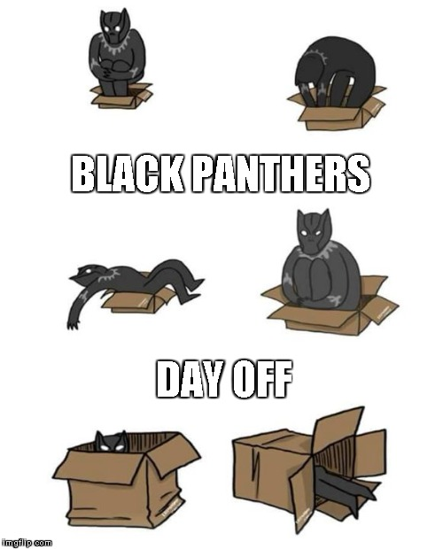 BLACK PANTHERS DAY OFF | image tagged in cat in a box | made w/ Imgflip meme maker