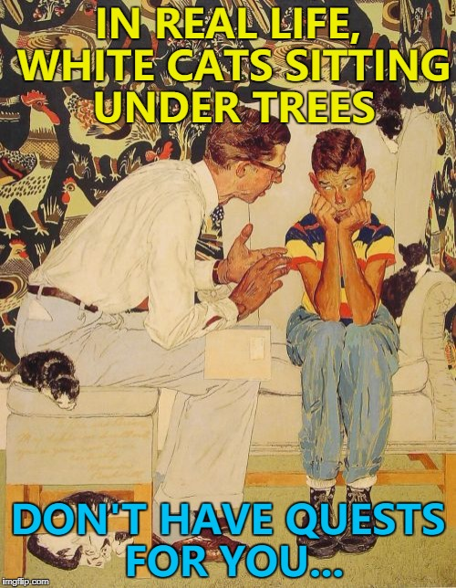 I saw this on Sunday and I really should've taken a picture... | IN REAL LIFE, WHITE CATS SITTING UNDER TREES DON'T HAVE QUESTS FOR YOU... | image tagged in memes,the probelm is,the problem is,video games,quests | made w/ Imgflip meme maker