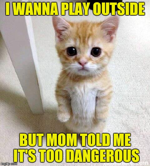 Cute Cat Meme | I WANNA PLAY OUTSIDE BUT MOM TOLD ME IT'S TOO DANGEROUS | image tagged in memes,cute cat | made w/ Imgflip meme maker