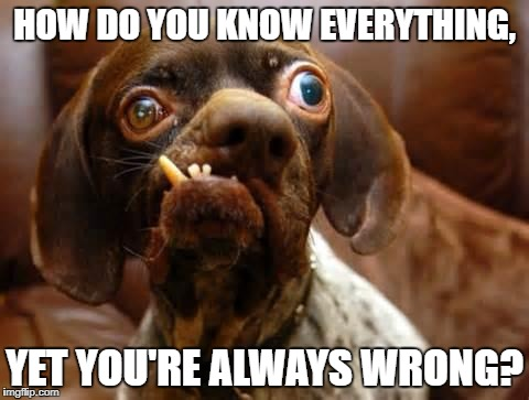 UGLY DOG | HOW DO YOU KNOW EVERYTHING, YET YOU'RE ALWAYS WRONG? | image tagged in ugly dog | made w/ Imgflip meme maker