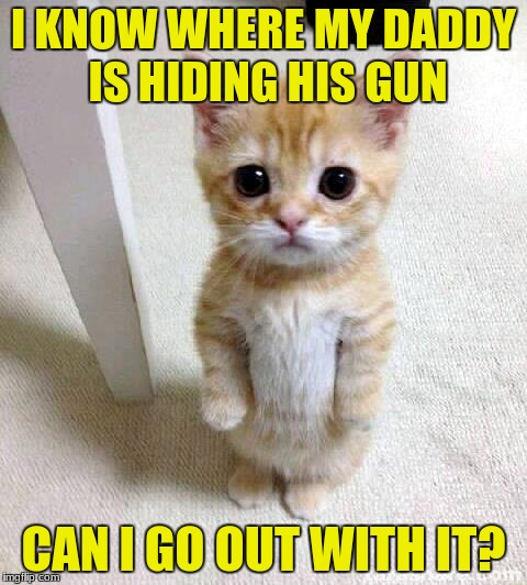 Cute Cat Meme | I KNOW WHERE MY DADDY IS HIDING HIS GUN CAN I GO OUT WITH IT? | image tagged in memes,cute cat | made w/ Imgflip meme maker