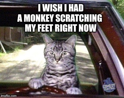 I WISH I HAD A MONKEY SCRATCHING MY FEET RIGHT NOW | made w/ Imgflip meme maker