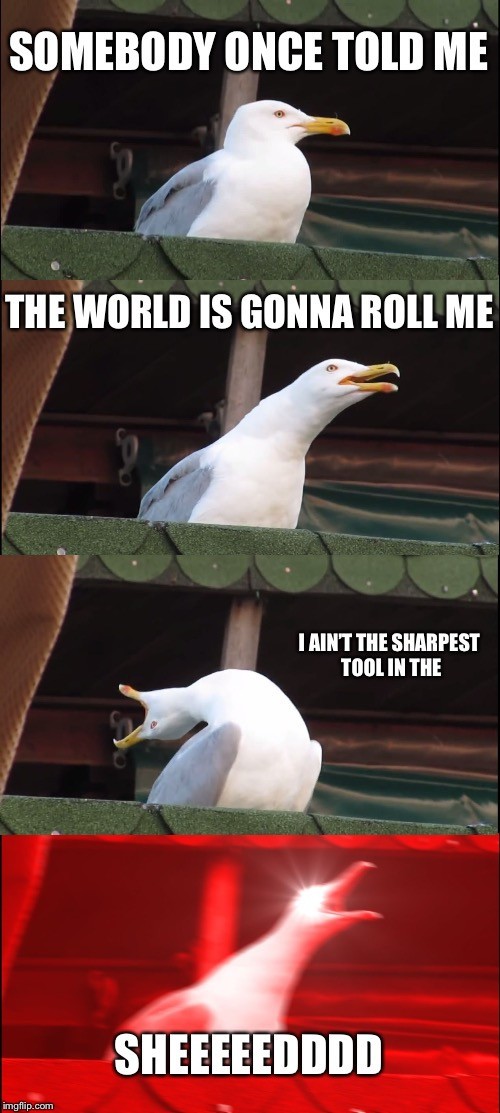 Seagull star | SOMEBODY ONCE TOLD ME THE WORLD IS GONNA ROLL ME I AIN'T THE SHARPEST TOOL IN THE SHEEEEEDDDD | image tagged in memes,inhaling seagull,all star | made w/ Imgflip meme maker