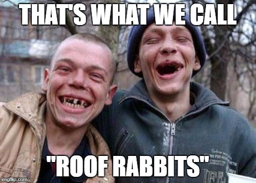 "THAT'S WHAT WE CALL ""ROOF RABBITS"" 