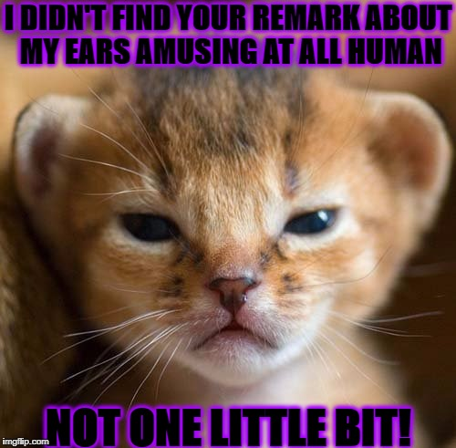 I DIDN'T FIND YOUR REMARK ABOUT MY EARS AMUSING AT ALL HUMAN NOT ONE LITTLE BIT! | image tagged in grumpy kitten | made w/ Imgflip meme maker