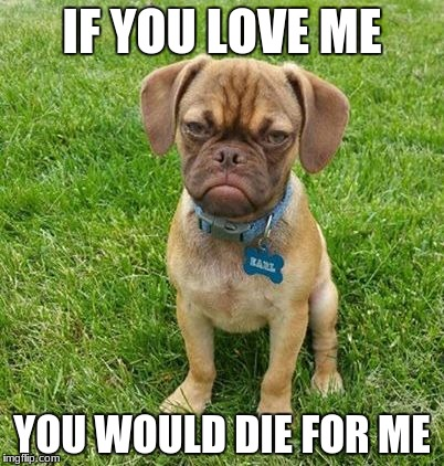 Grumpy Dog |  IF YOU LOVE ME; YOU WOULD DIE FOR ME | image tagged in grumpy dog | made w/ Imgflip meme maker