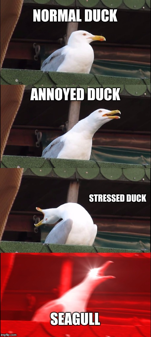 duck stages | NORMAL DUCK ANNOYED DUCK STRESSED DUCK SEAGULL | image tagged in memes,inhaling seagull | made w/ Imgflip meme maker