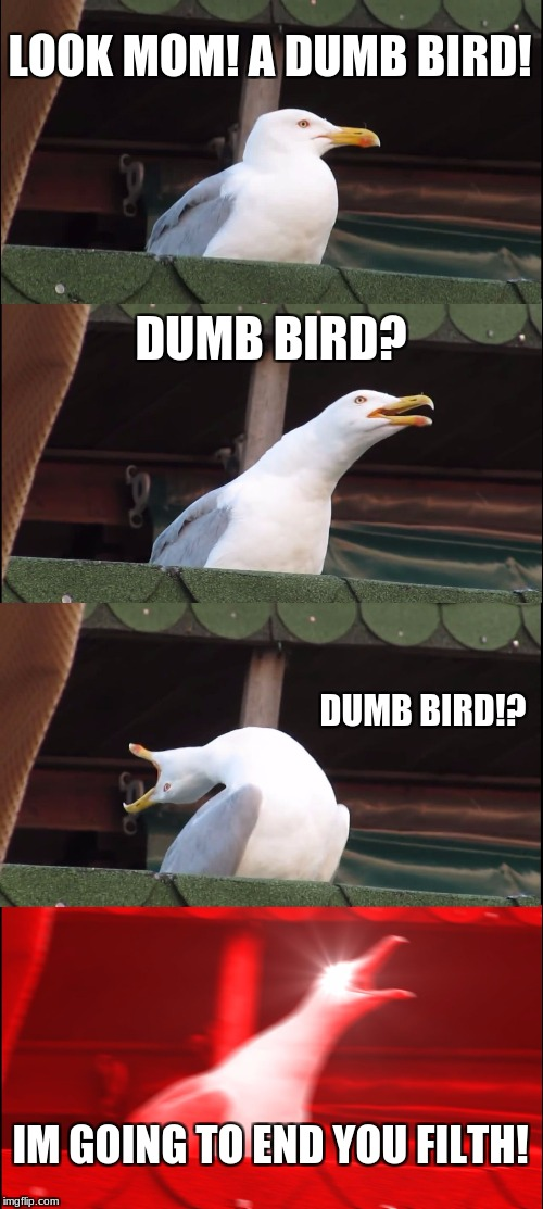 Dis is what someone with anger issues feels | LOOK MOM! A DUMB BIRD! DUMB BIRD? DUMB BIRD!? IM GOING TO END YOU FILTH! | image tagged in memes,inhaling seagull | made w/ Imgflip meme maker