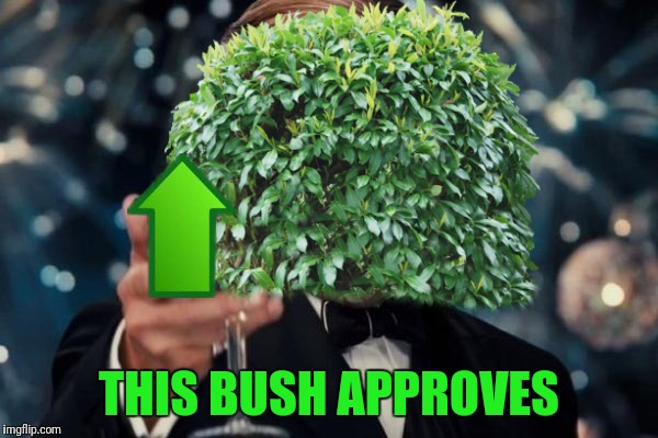 THIS BUSH APPROVES | made w/ Imgflip meme maker