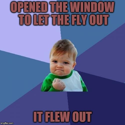 Success Kid Meme | OPENED THE WINDOW TO LET THE FLY OUT IT FLEW OUT | image tagged in memes,success kid | made w/ Imgflip meme maker