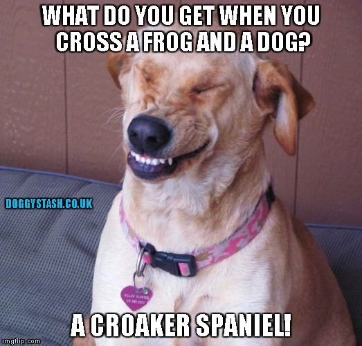 WHAT DO YOU GET WHEN YOU CROSS A FROG AND A DOG? A CROAKER SPANIEL! | image tagged in laughing dog | made w/ Imgflip meme maker