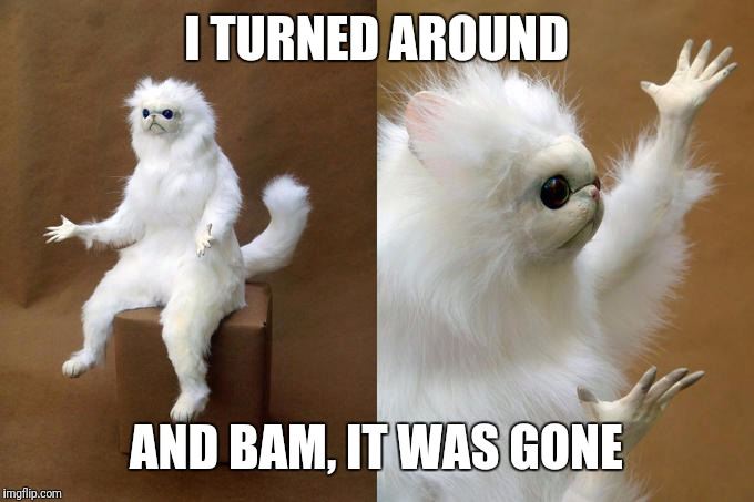 Persian Cat Room Guardian Meme | I TURNED AROUND AND BAM, IT WAS GONE | image tagged in memes,persian cat room guardian | made w/ Imgflip meme maker