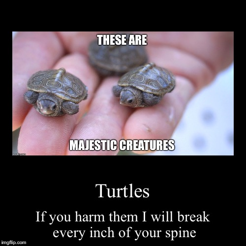 Turtles | If you harm them I will break every inch of your spine | image tagged in funny,demotivationals | made w/ Imgflip demotivational maker
