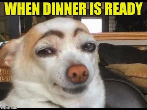 funny | WHEN DINNER IS READY | image tagged in dog,food | made w/ Imgflip meme maker