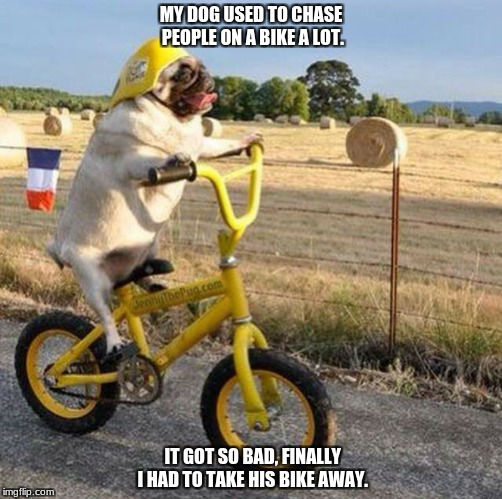 best dog | MY DOG USED TO CHASE PEOPLE ON A BIKE A LOT. IT GOT SO BAD, FINALLY I HAD TO TAKE HIS BIKE AWAY. | image tagged in dogs,funny | made w/ Imgflip meme maker