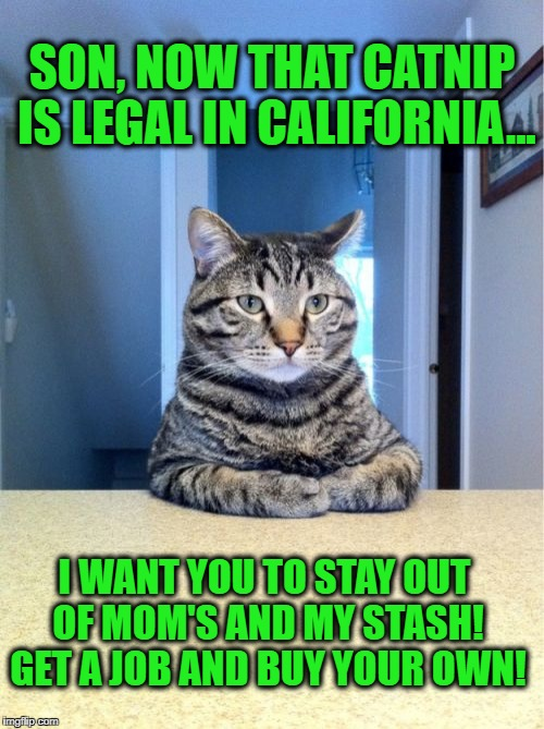 Take a seat, son, we need to talk... | SON, NOW THAT CATNIP IS LEGAL IN CALIFORNIA... I WANT YOU TO STAY OUT OF MOM'S AND MY STASH! GET A JOB AND BUY YOUR OWN! | image tagged in memes,take a seat cat,catnip,marijuana,parenting,get a job | made w/ Imgflip meme maker