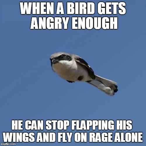 Overly Angry Bird | WHEN A BIRD GETS ANGRY ENOUGH HE CAN STOP FLAPPING HIS WINGS AND FLY ON RAGE ALONE | image tagged in memes,birds,angry bird,angry birds,flying,rage | made w/ Imgflip meme maker
