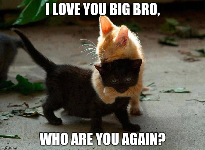 kitten hug | I LOVE YOU BIG BRO, WHO ARE YOU AGAIN? | image tagged in kitten hug | made w/ Imgflip meme maker