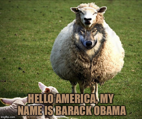 Pull the Wool | HELLO AMERICA, MY NAME IS BARACK OBAMA | image tagged in obama,sheep,president,fool,memes | made w/ Imgflip meme maker