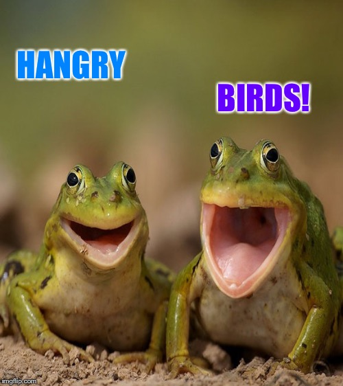 HANGRY BIRDS! | made w/ Imgflip meme maker