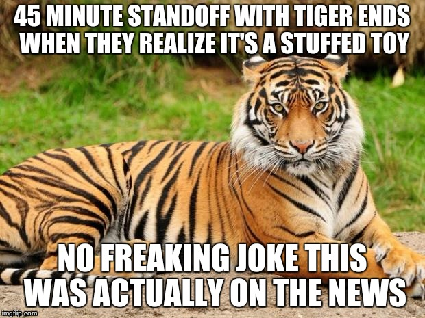 srsly tiger | 45 MINUTE STANDOFF WITH TIGER ENDS WHEN THEY REALIZE IT'S A STUFFED TOY NO FREAKING JOKE THIS WAS ACTUALLY ON THE NEWS | image tagged in srsly tiger | made w/ Imgflip meme maker