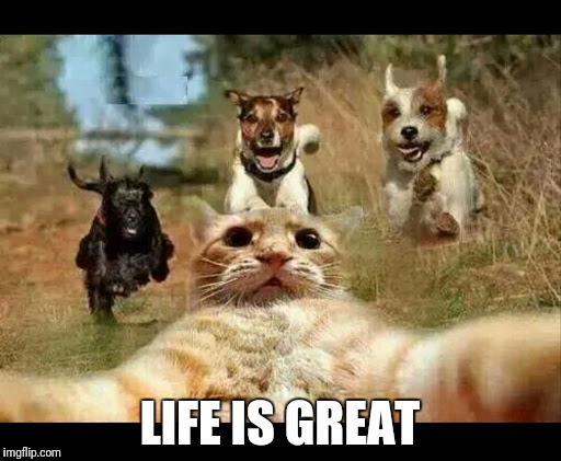Best selfie ever? | LIFE IS GREAT | image tagged in funny cats,selfie,selfies,funny dogs,dogs,dogs an cats | made w/ Imgflip meme maker