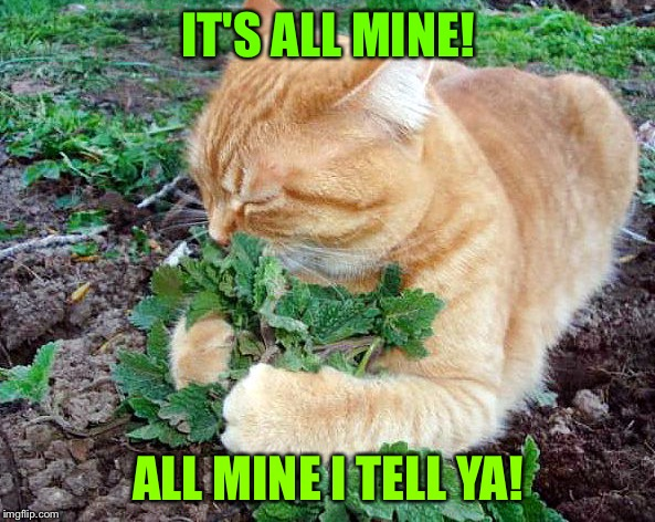 IT'S ALL MINE! ALL MINE I TELL YA! | made w/ Imgflip meme maker