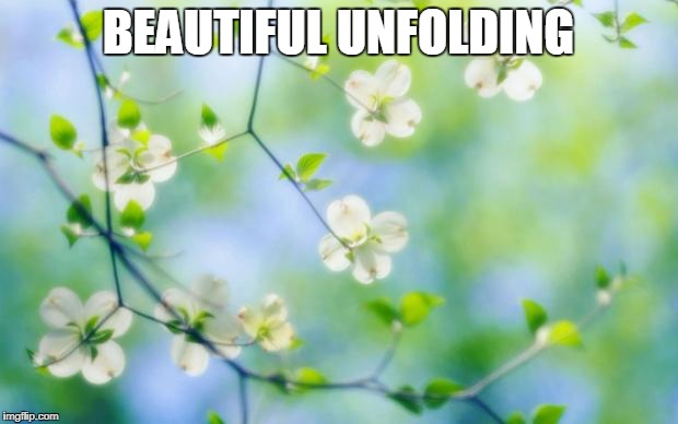flowers | BEAUTIFUL UNFOLDING | image tagged in flowers | made w/ Imgflip meme maker