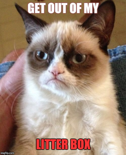 Grumpy Cat Meme | GET OUT OF MY LITTER BOX | image tagged in memes,grumpy cat | made w/ Imgflip meme maker