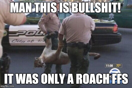 Busted Mountain Lion | MAN THIS IS BULLSHIT! IT WAS ONLY A ROACH FFS | image tagged in busted mountain lion | made w/ Imgflip meme maker